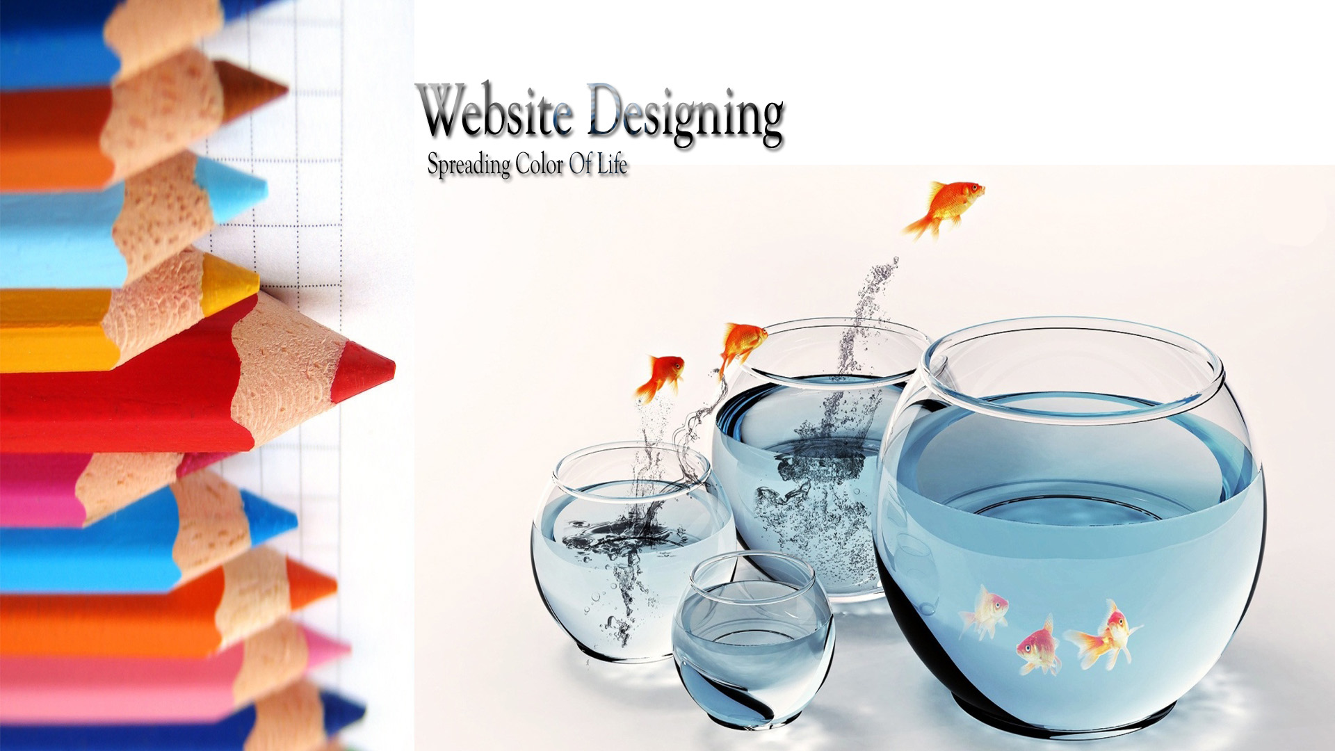 Website Development Company Delhi, India| Website Design Company